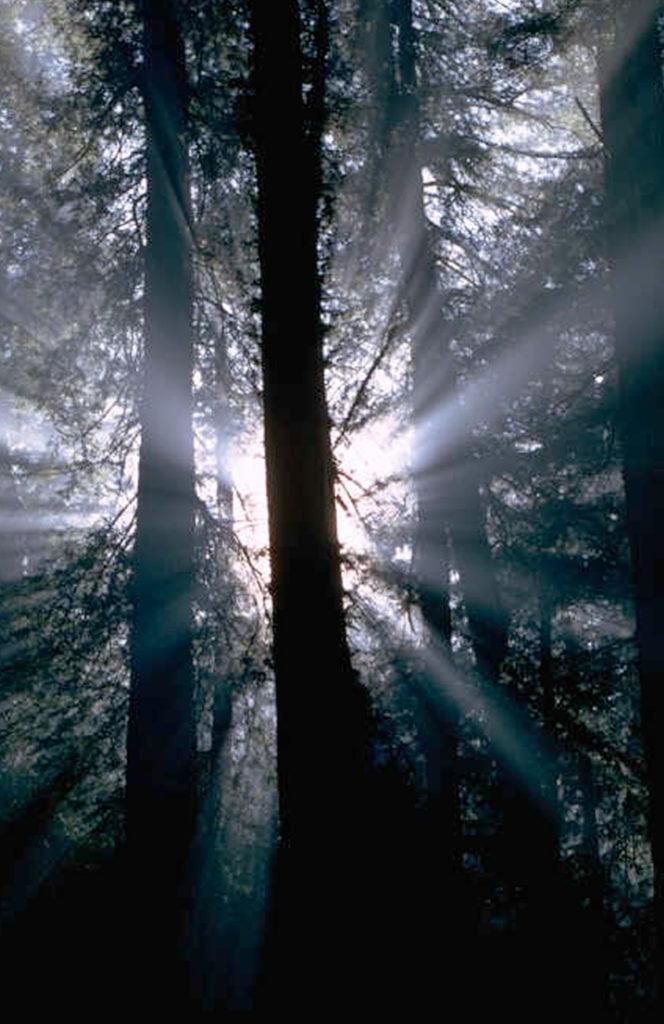 Wald-mit-Gegenlicht